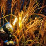 Gartenbeleuchtung Außenbeleuchtung durch Profis - Baumteufel Garten und Landschaftsbau für Berlin Brandenburg